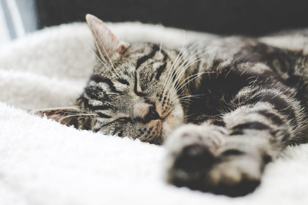 réussir ses études grâce au sommeil